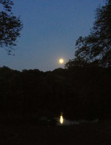 moon reflecting on the river