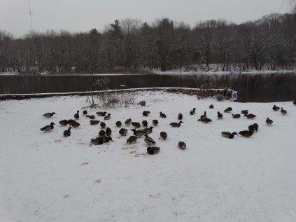 My flock.