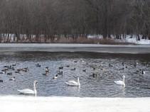 Amongst the flock.