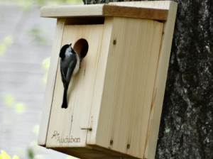 checking out nest box