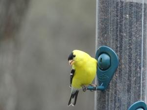 Molto bello il mio uccello