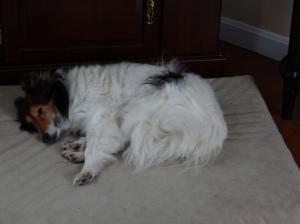 Penny, enjoying the good life.
