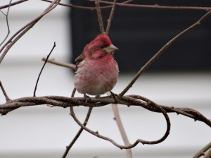 Even a purple finch got curious.