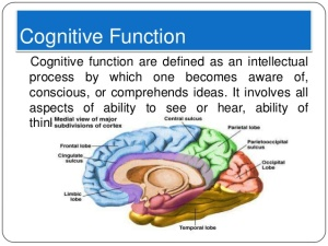 brain-exercise-for-improving-cognitive-functions-2-638