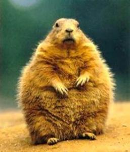 groundhog day 2017-Punxsutawney Phil-groundhog