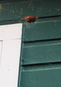 woodpecker hole in house, hole in house from bird