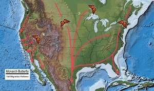 monarch butterfly migration map
