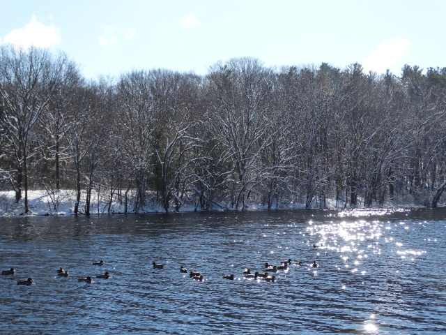 concord river-river-ice-ducks-beauty-nature