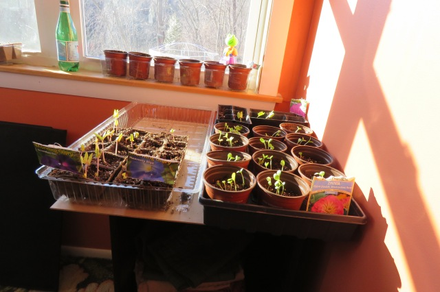 seedlings - seeds - plants - flowers