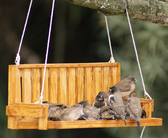 bird_feeder - feeders - songbirds - birds